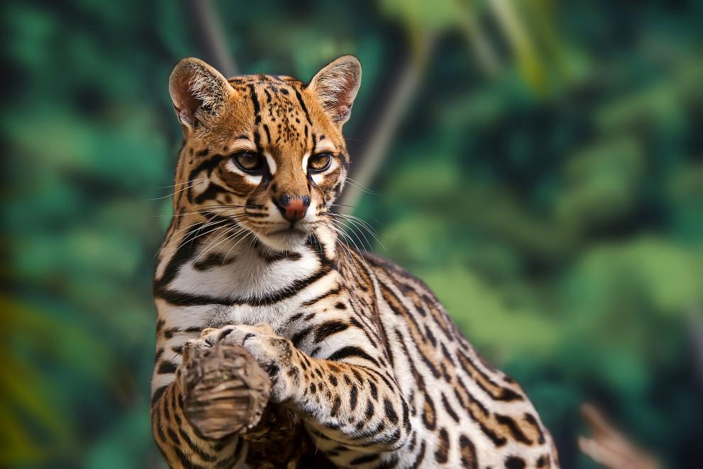 Fauna bosque tropical