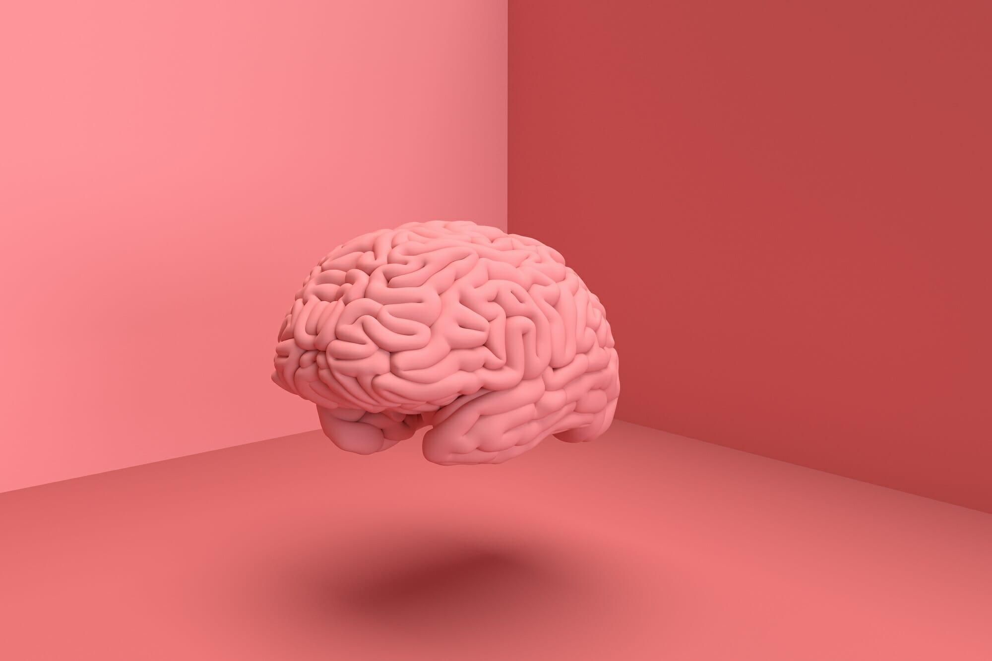 Cerebro qué es