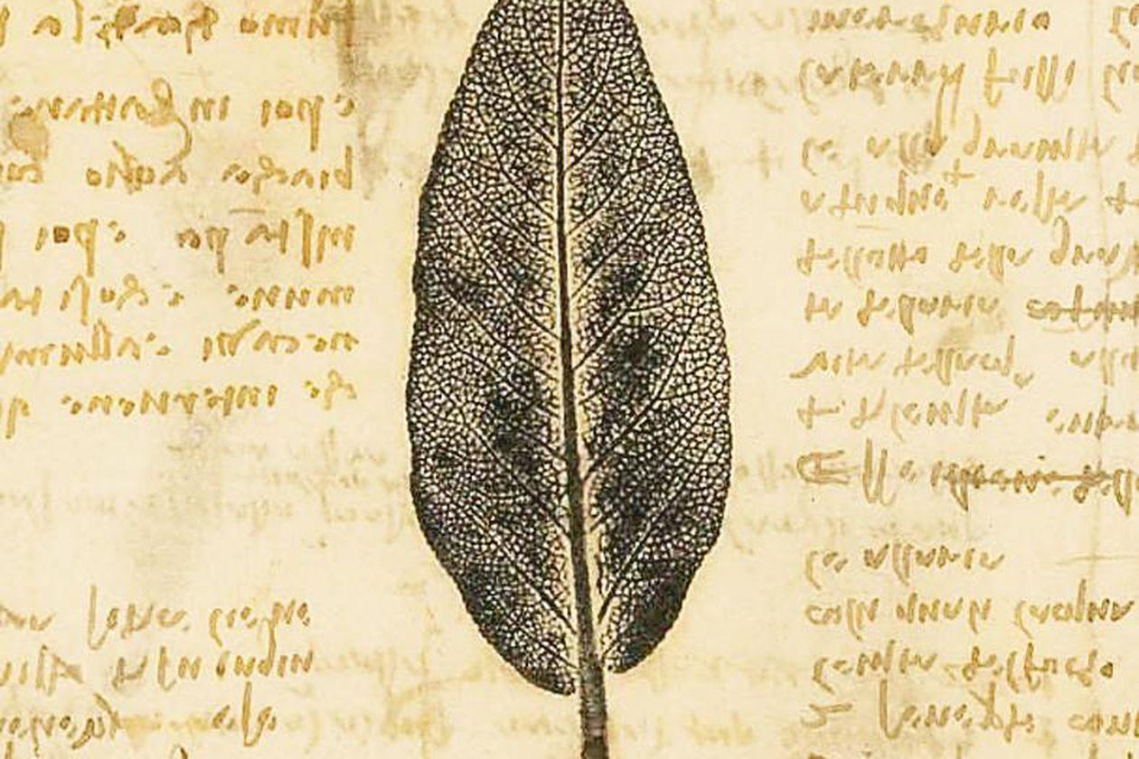 Da Vinci botánica