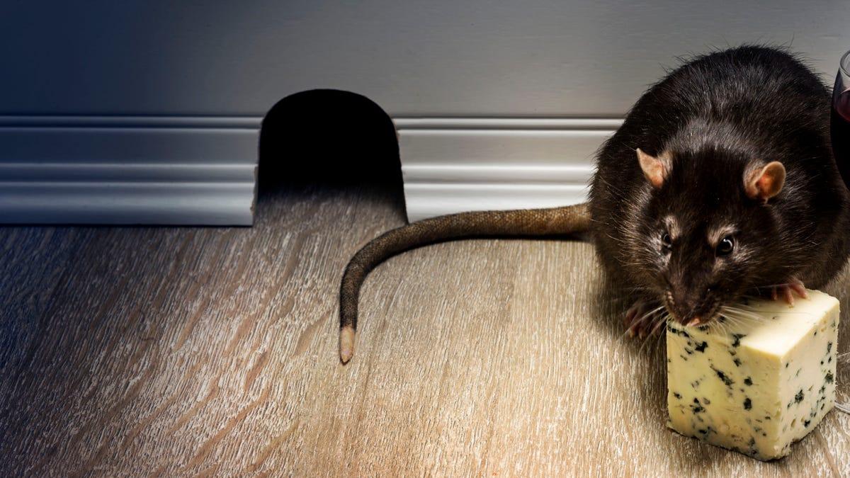 Ratón queso