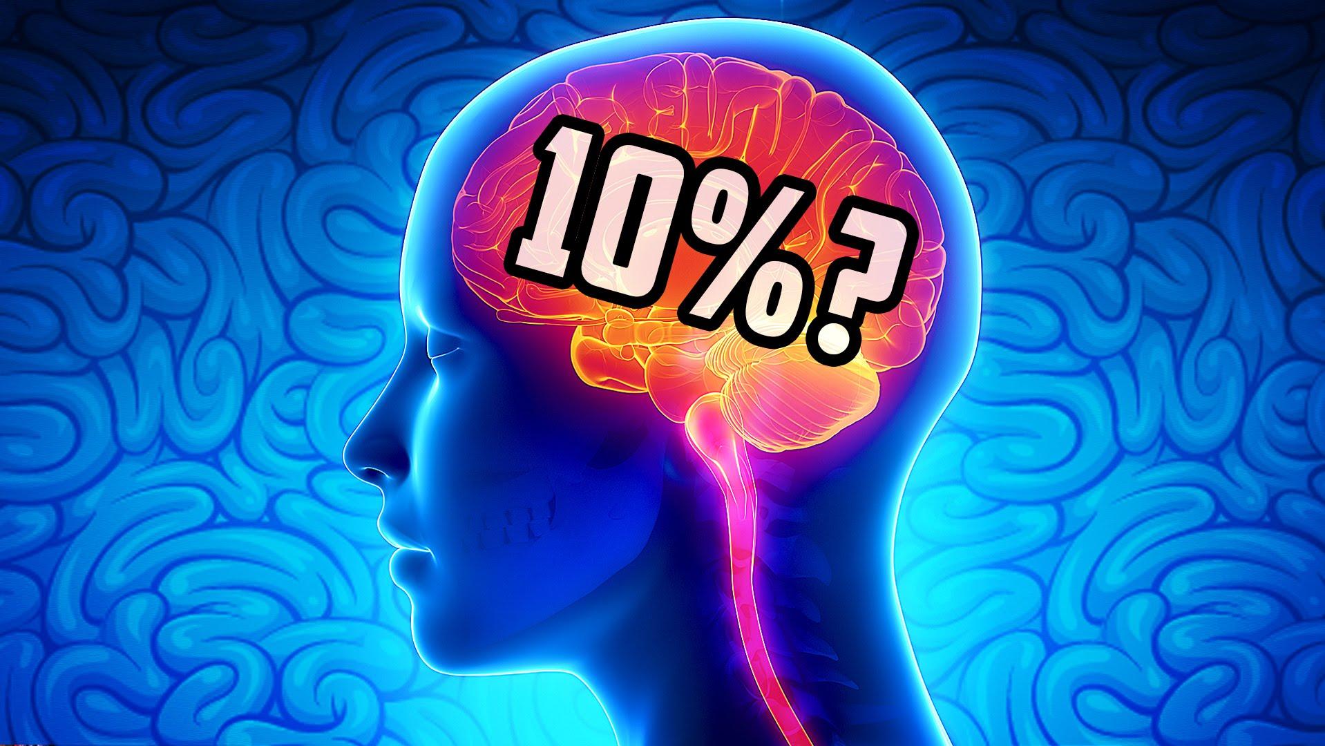 10-cerebro