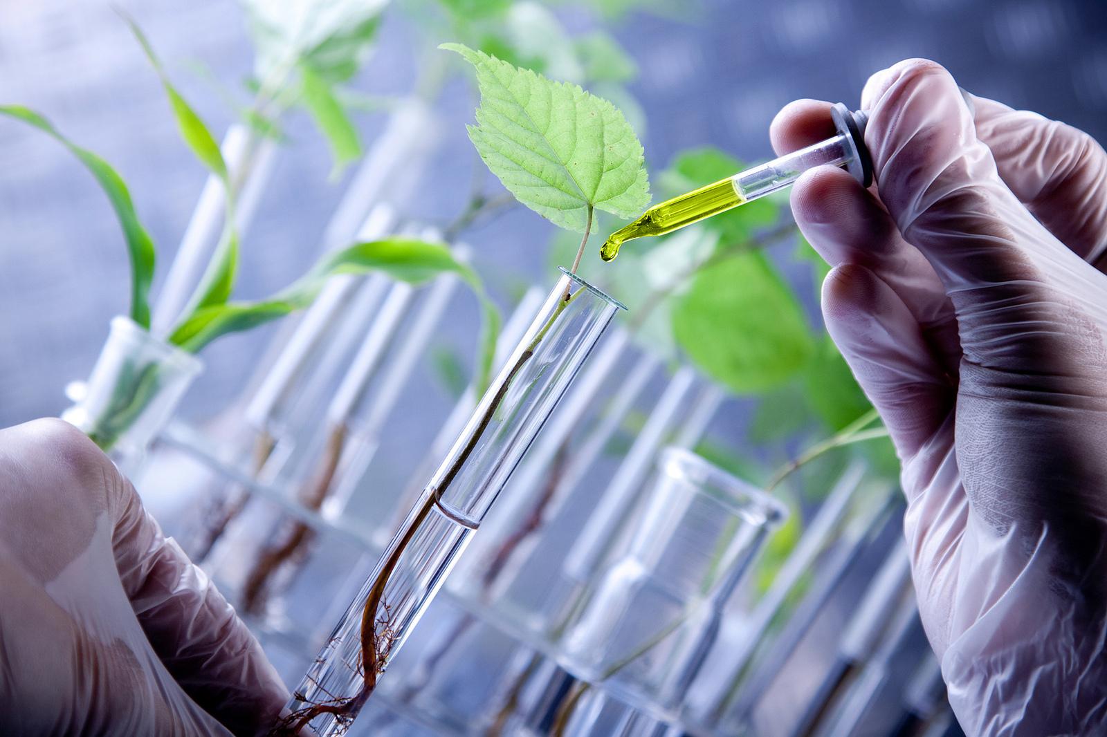 biotecnologia-verde