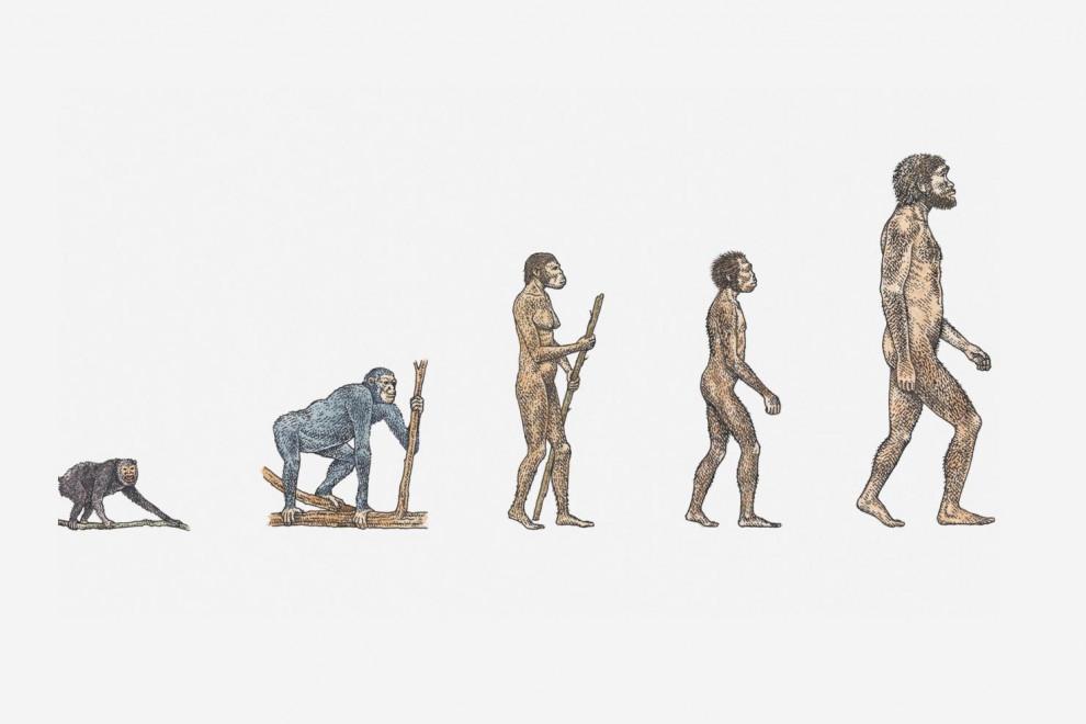 Teoría de Lamarck evolución
