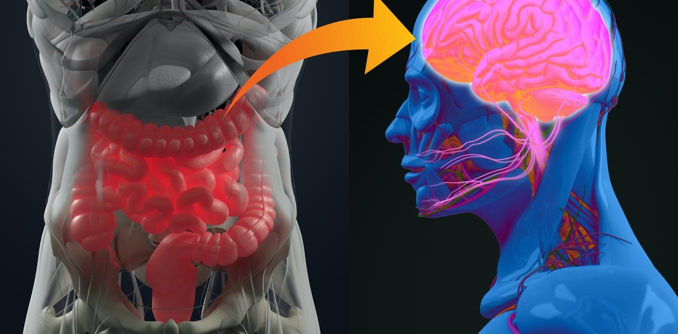 Sistema nervioso entérico