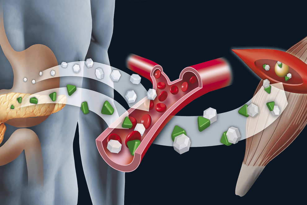 Diferencias insulina glucagón