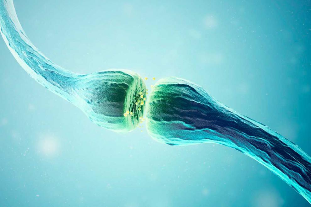 Tipos sinapsis