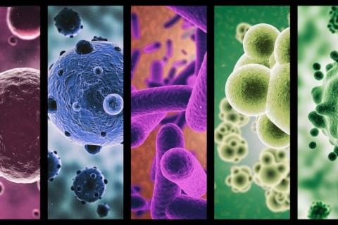 Ramas de microbiología