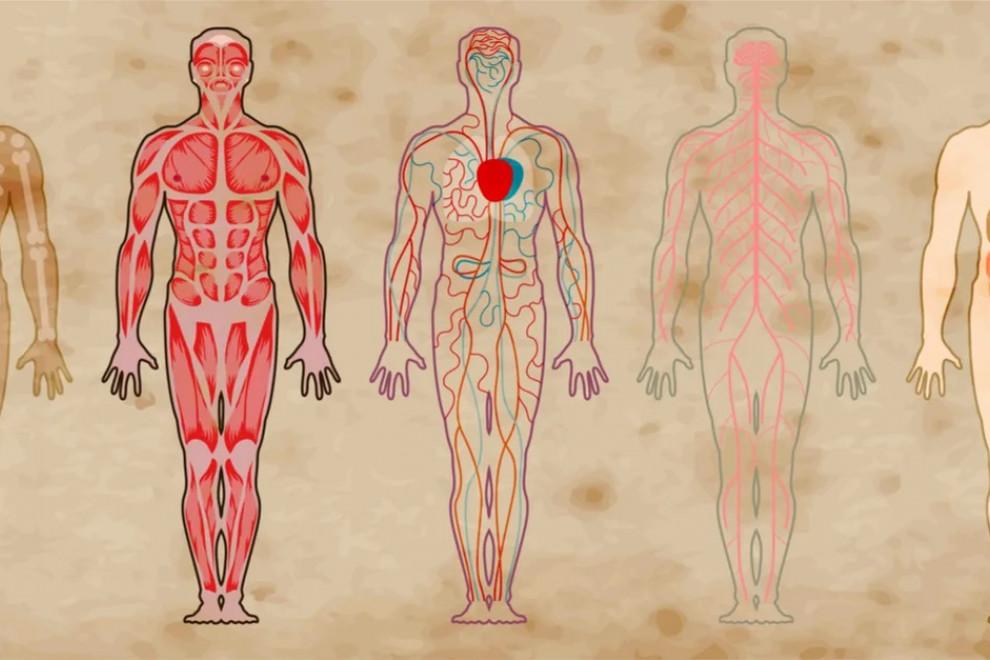 Órganos vestigiales