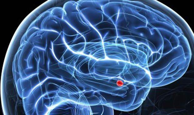 Amígdala cerebro
