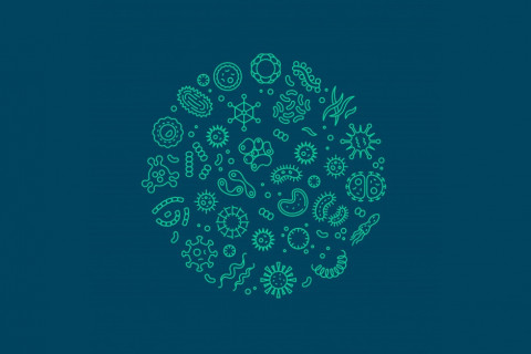 Microorganismos en la industria