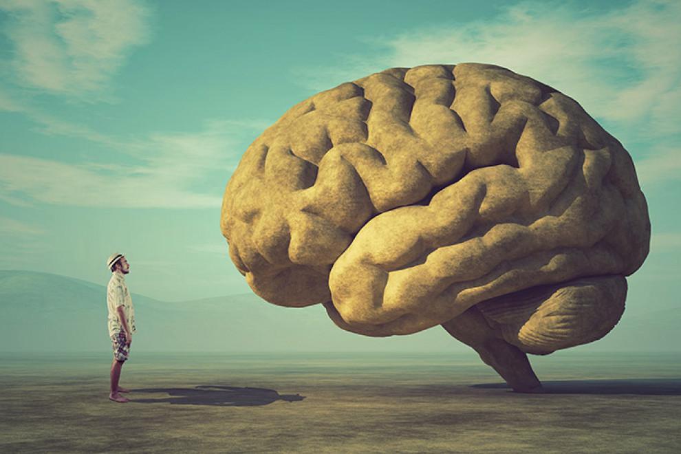 Diencéfalo cerebro