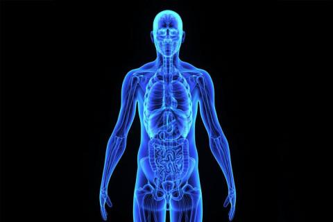 Simetría del cuerpo humano