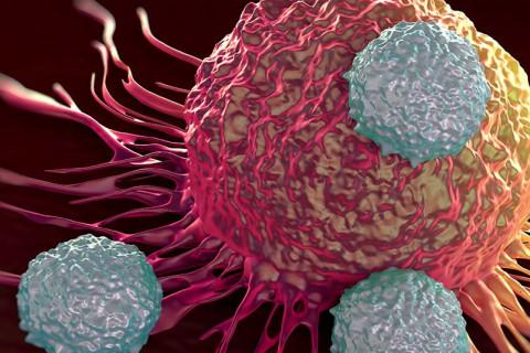 Microbiota y cáncer