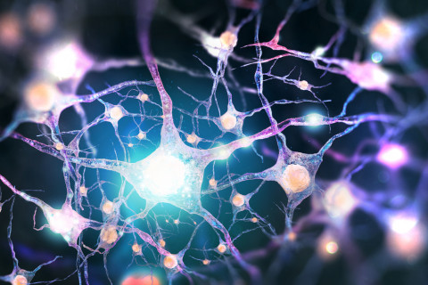 Glicina neurotransmisor