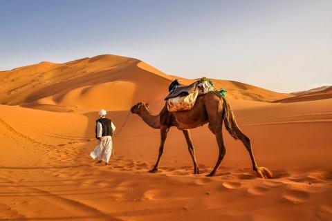 Animales desierto
