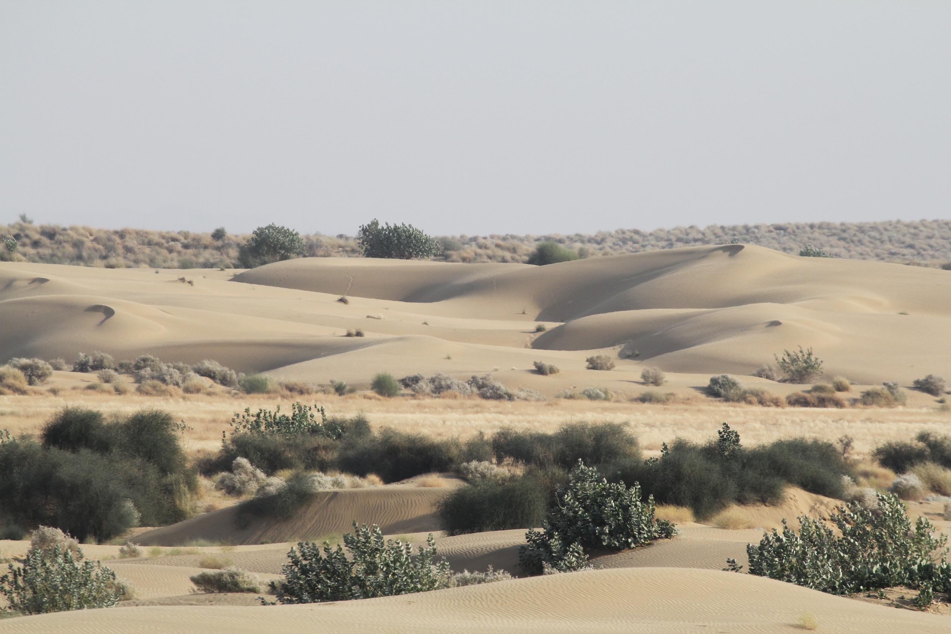 Desierto monzónico