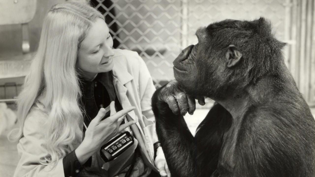 Humano simio
